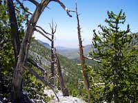 Wallace Canyon, Spring Mtns