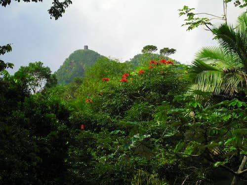 Mt Britton from El Yunque Trail