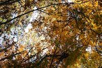 Yellow in Fall