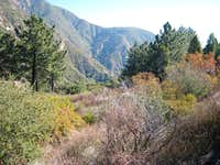 Looking Down Castle Canyon