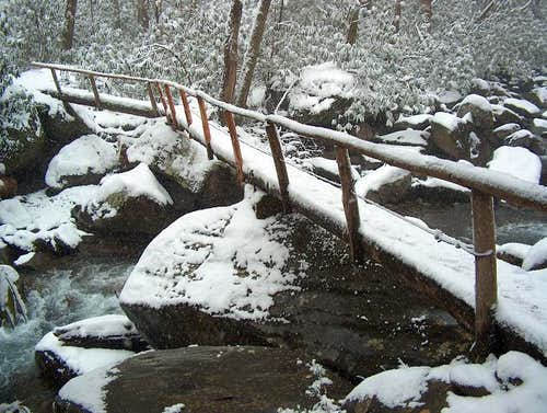 Footbridge with Rhododendrons in Snow