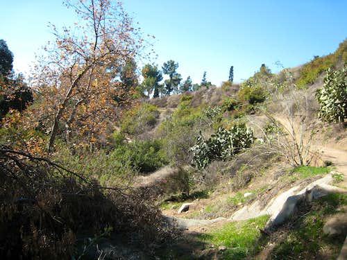 Las Flores Canyon, San Gabriel Mtns.