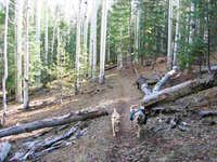 Abineau/Bear Jaw Trails