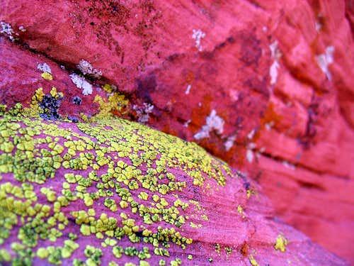 Nevada Colours