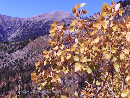 Autumn on North Loop Trail