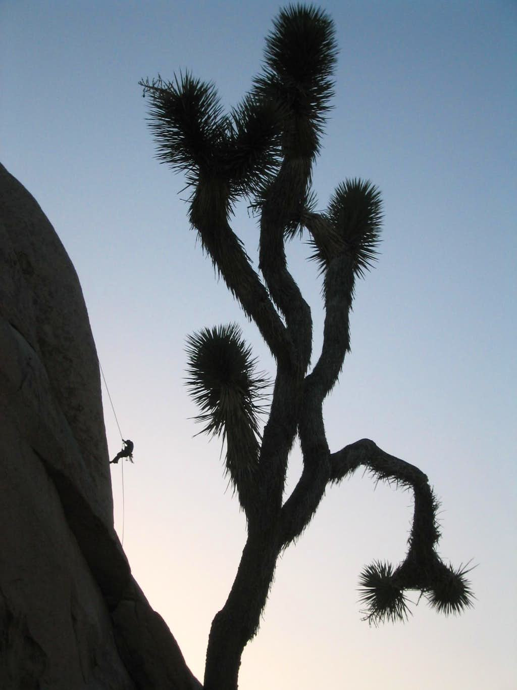 Rappelling off of Intersection Rock - Joshua Tree