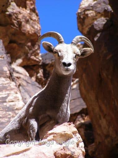 Wildlife of Southern Nevada