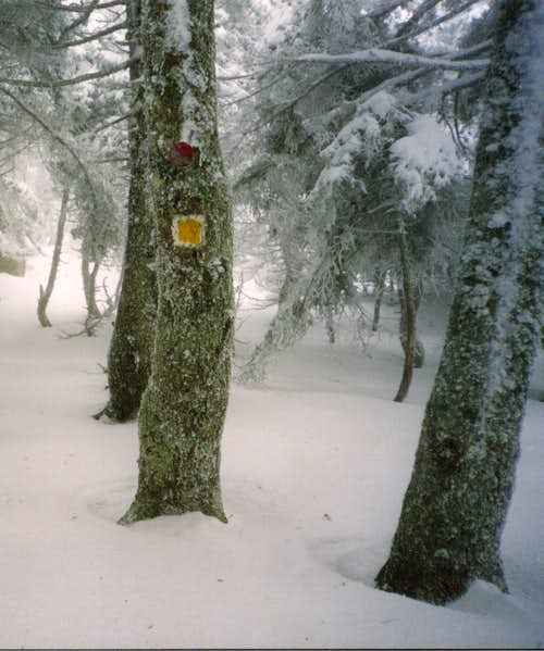 In the path from Paliochori to Skipiza(February 2003)