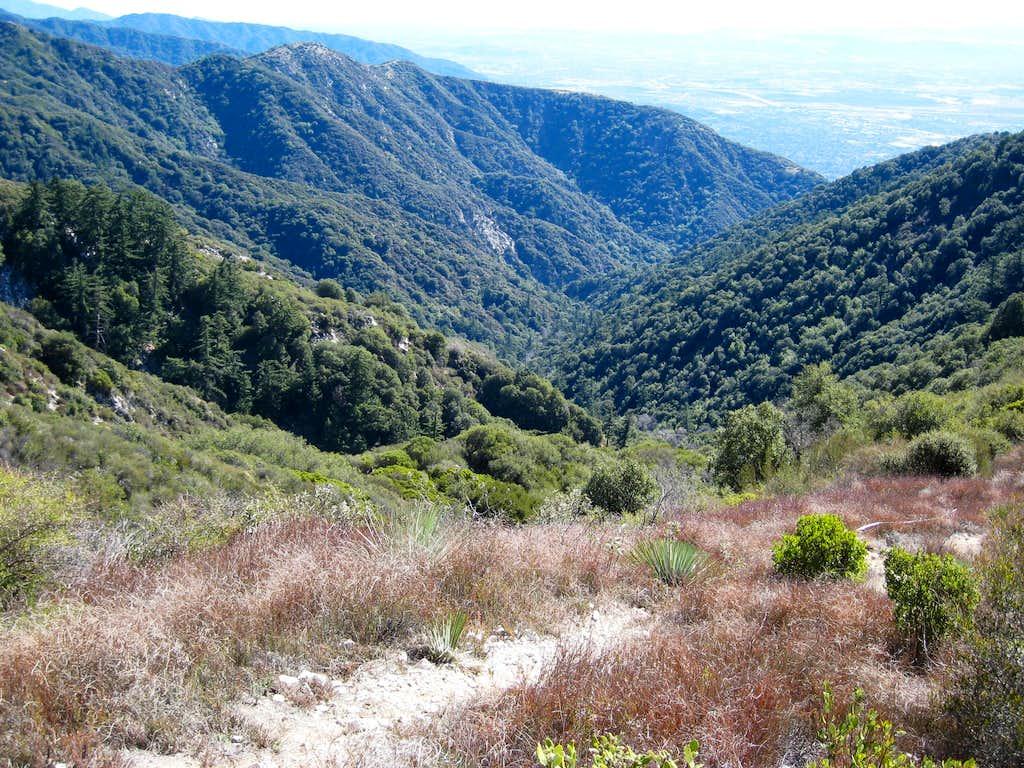 View into Little Santa Anita Canyon