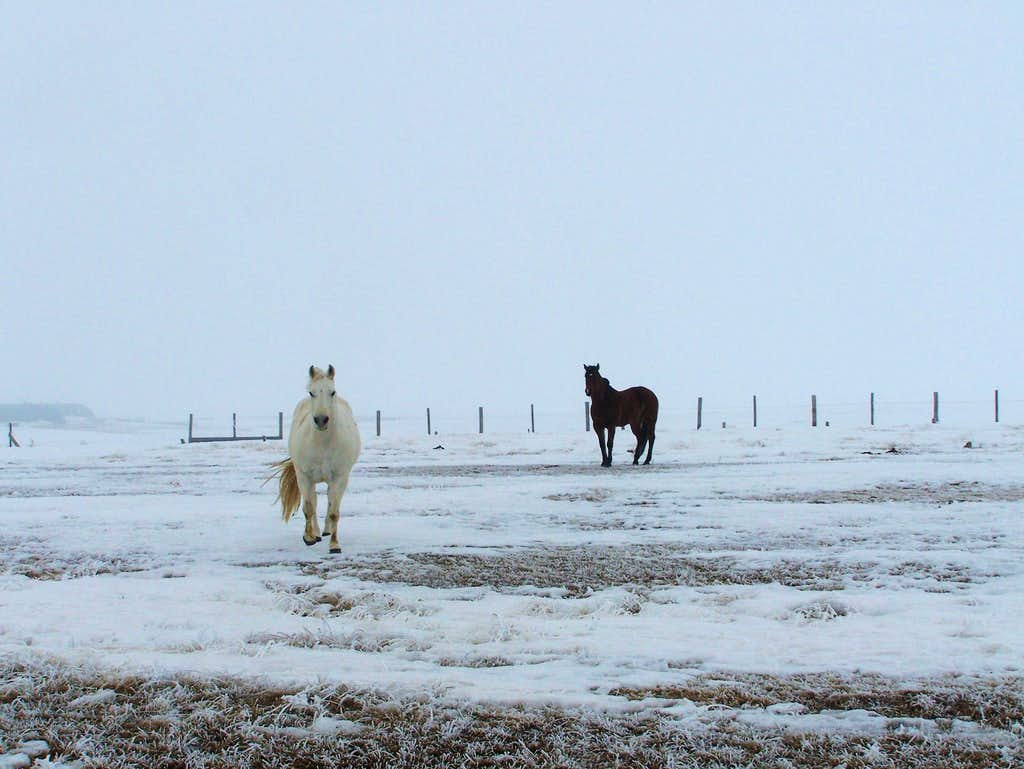 Horse running at me