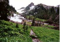 Hoh River Trail, July 2001
