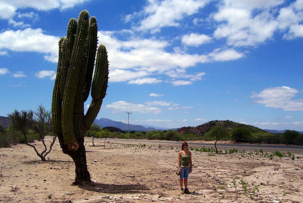 Big cactus photos diagrams topos summitpost for Cactus argentina