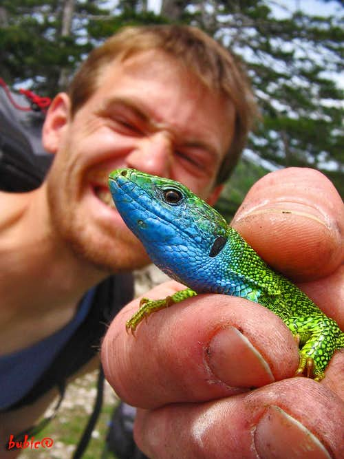 Seb & Lizard