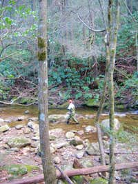 Fly fishing on Jacob Fork.