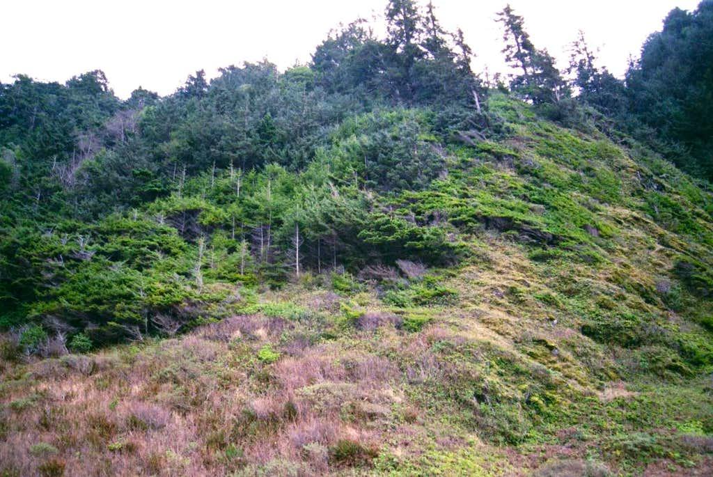 Sea Level Krumholz