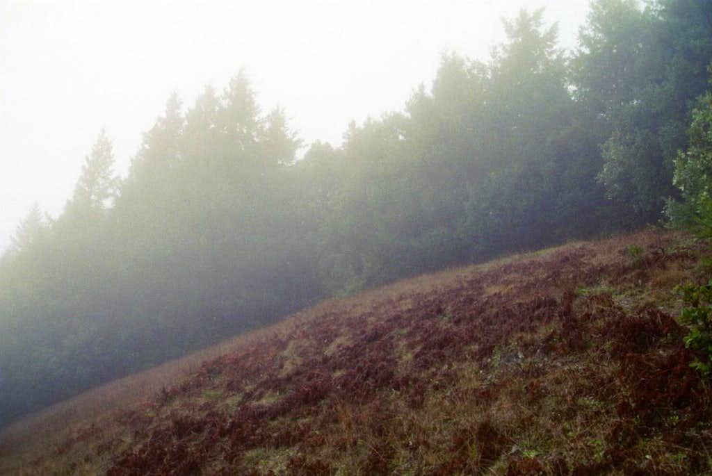 The Summit of Humbug