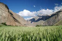 Epis de blé dressés vers le ciel d'Askole