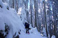 Marys Peak Summit Trail