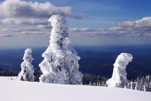 Rime Covered Trees