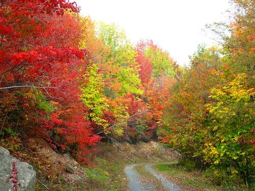 Bear Branch Road