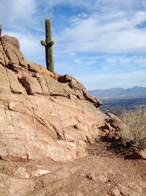 Along the Cholla Trail