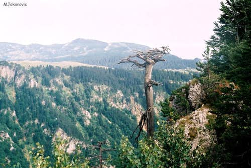 Susica canyon