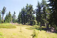 Subalpine Forest Near the Summit