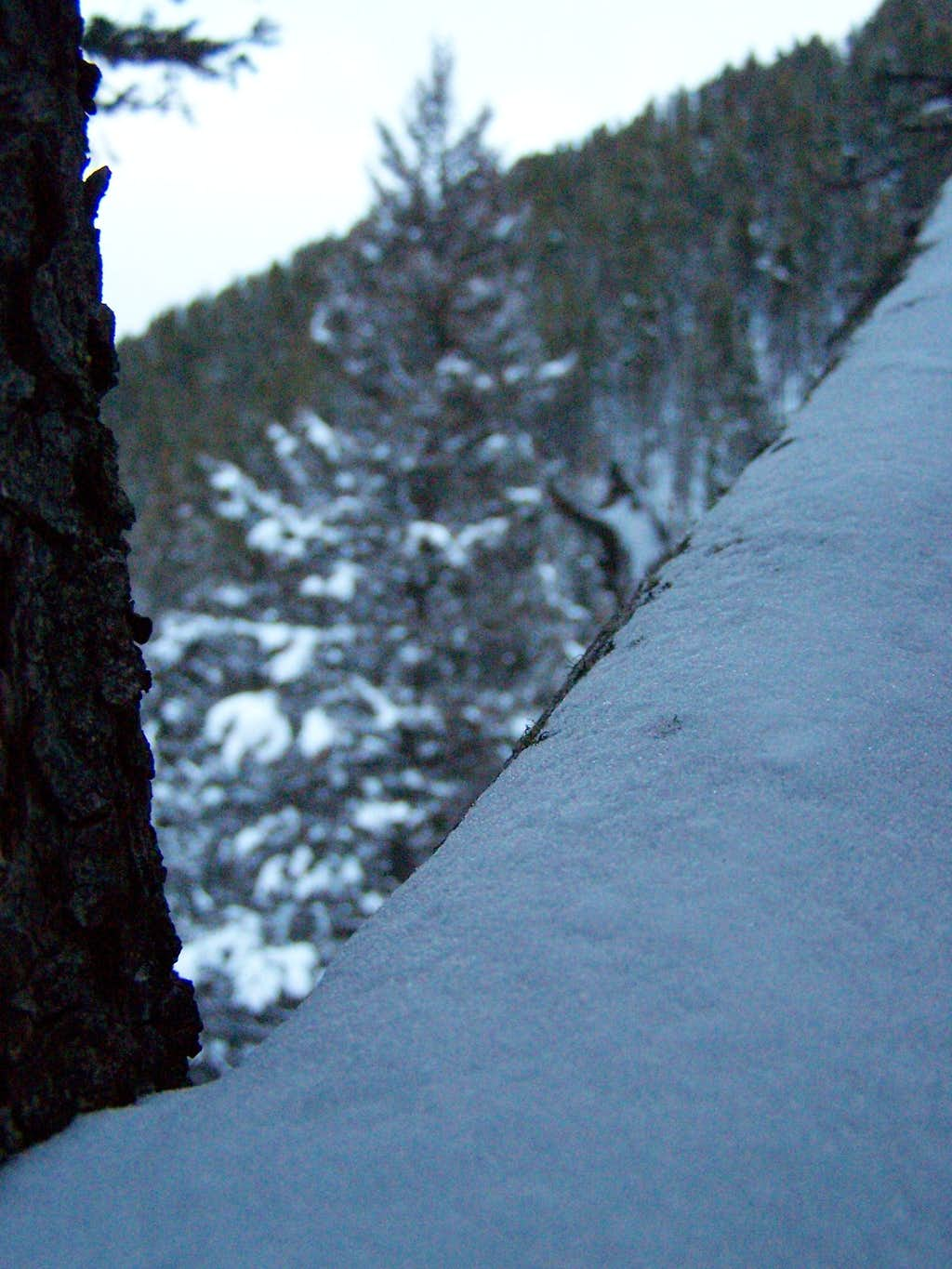 Hyalite Snowfall, and the thick forests