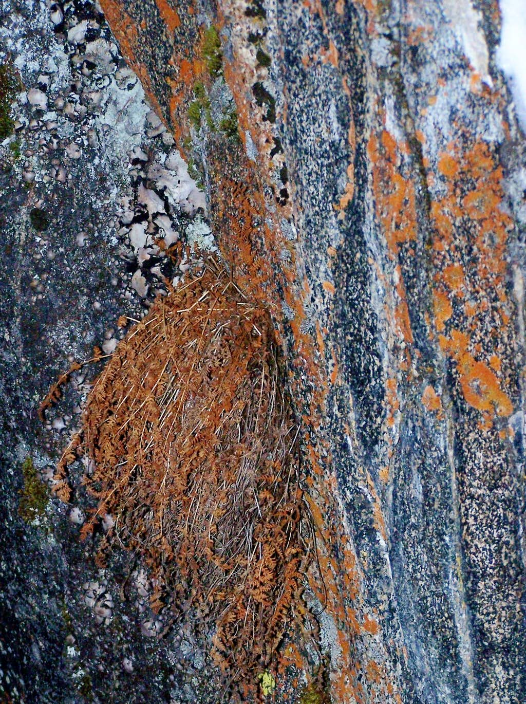 Amazing Flora/lichens of Hyalite Canyon