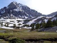 Alpine grass.