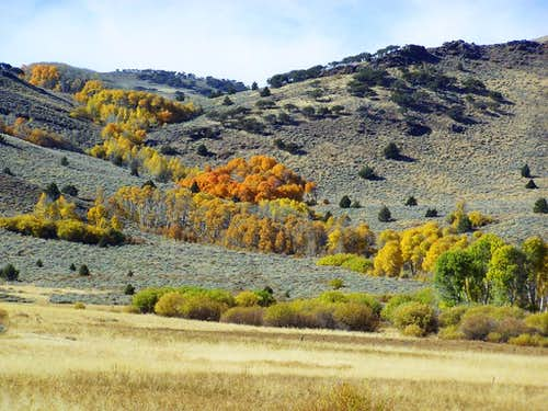 Fall colors near Warner Peak