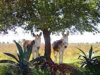 Donkeys near by pico orizaba (mex)