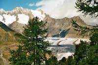 Aletsch-Glacier and forest...