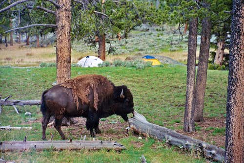 our camp, on the other side of the menacing buffalo