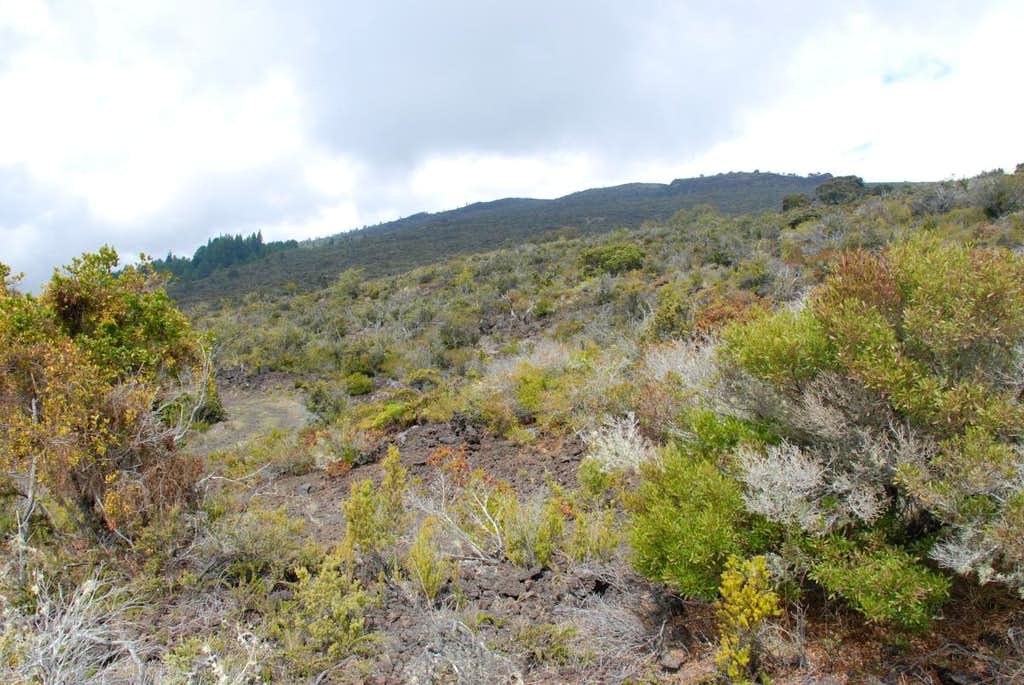 west slope terrain
