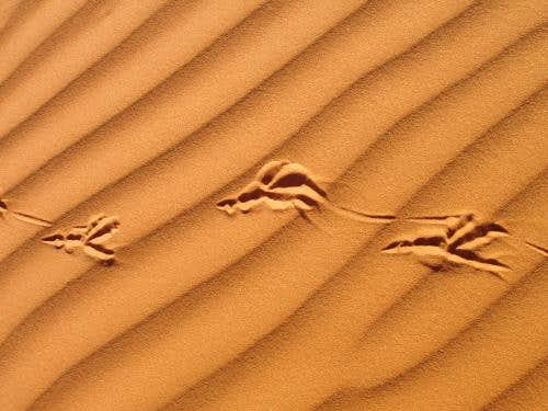 Tracks in the Pink Sand II