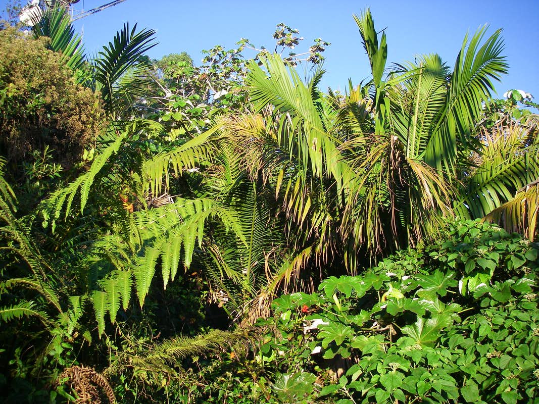 Rainforest vegetation on Cerro de Punta