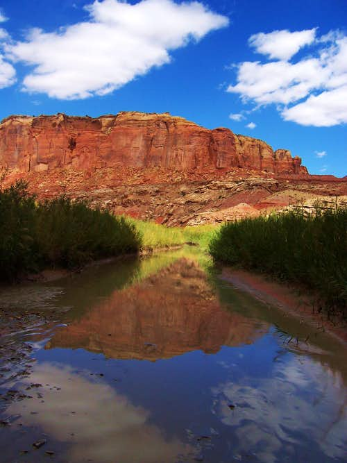 Reflection in Muddy Creek
