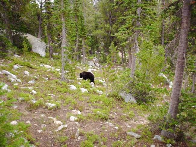 Why there are bear poles at...