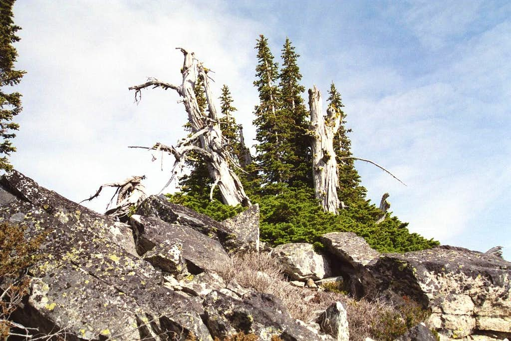 Crag Peak Talus and Vegetation