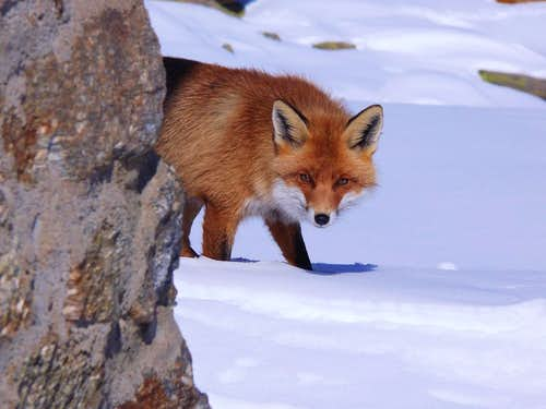 The Fox (Valsavarenche, Gran Paradiso), 22 febbraio 2007