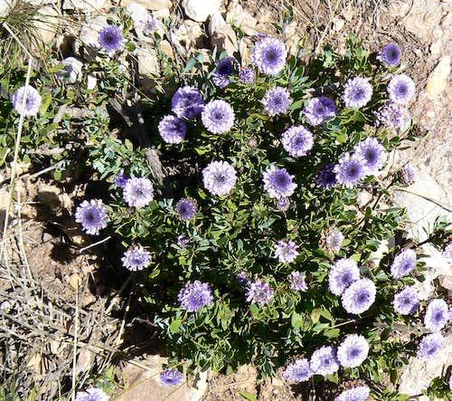 Montserrat Flora