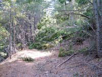 Obstacles on the trail up Cobb