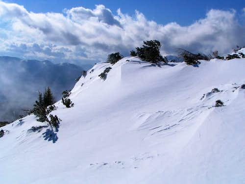 Snowy Peca