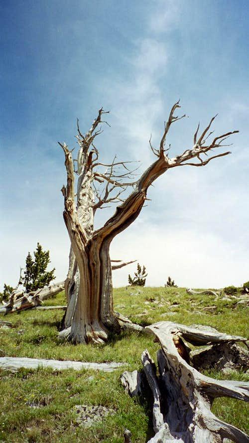 On Rosalie Peak, Colorado