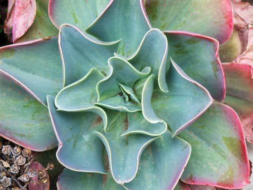 Cacti type plant