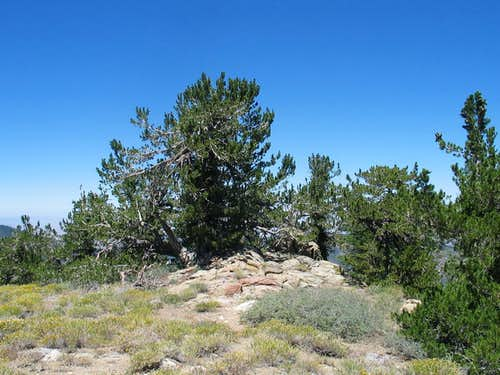 High point of Mt. Pinos?