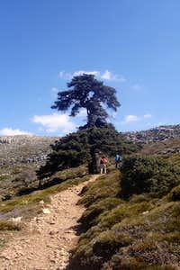 Sierra de las Nieves Park (Málaga)