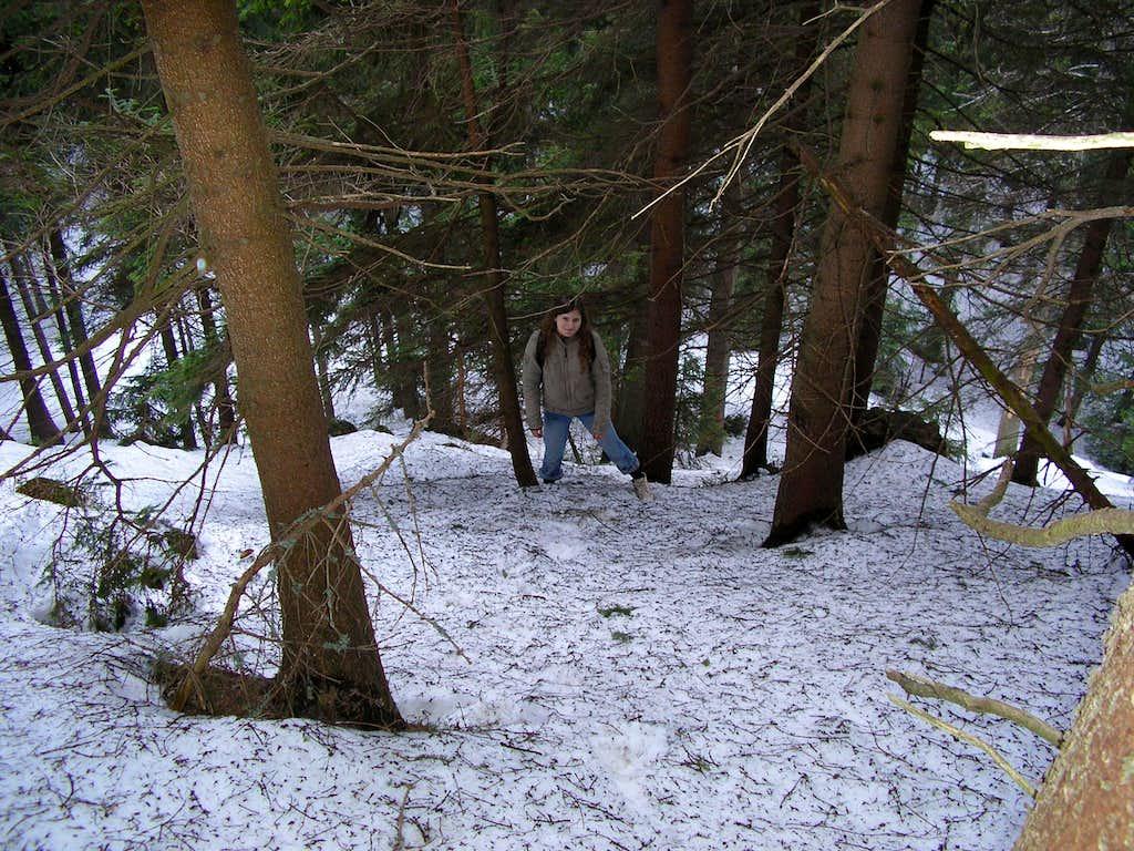 Forest on Romanka