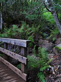 The wooden bridge across Fern Creek